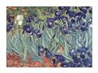 Van Gogh Lirios Lámina