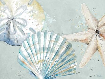 Beach Shells by Patricia Pinto art print