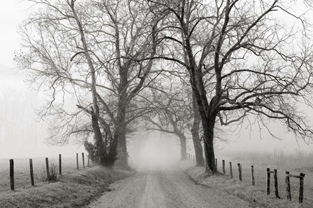 Sparks Lane, Late Autumn by Nicholas Bell art print