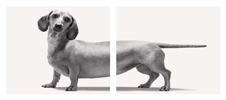 Heads and Tails by Jon Bertelli art print