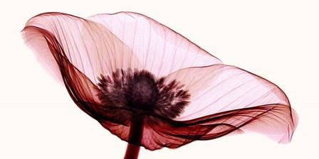 Anemone I by Robert Coop art print