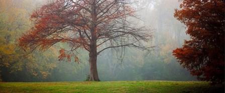 A Late Autumn Morning by Katya Horner art print
