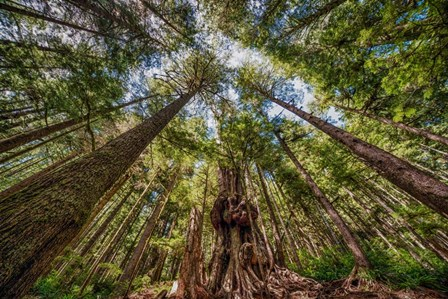 Avatar Grove Canopy by Tim Oldford art print