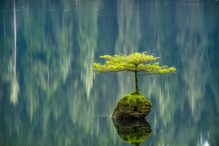 Fairy Lake Bonsai by Tim Oldford art print