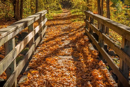 Fall On The Footbridge by Tim Oldford art print
