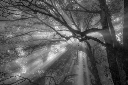 Forest Fog by Tim Oldford art print