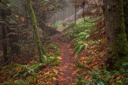 Forest Stroll by Tim Oldford art print