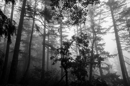 Misty Forest by Tim Oldford art print