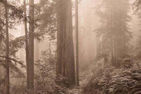 Enchanted Forest II by Igor Svibilsky art print