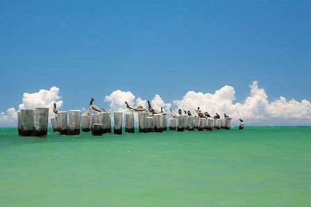 Gull Conference by Verne Varona art print