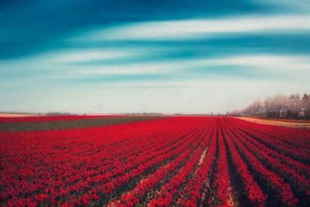 Tulips by Dirk Wüstenhagen art print