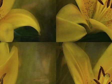Lily Abstract by Heather Buechel art print