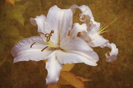 White Llilies by Jenny Rainbow Fine Art art print