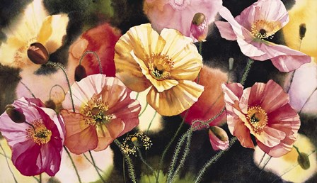 Iceland Poppies by Svetlana Orinko art print