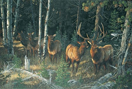 Wilderness Whispers by Terry Doughty art print