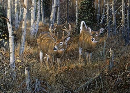 November Instinct by Terry Doughty art print
