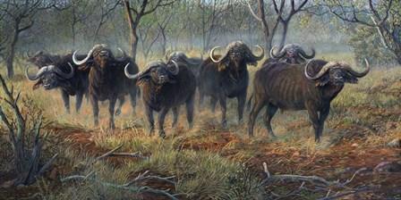 Cape Buffalo by Terry Doughty art print