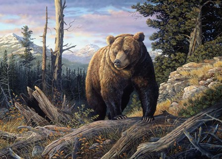 Mountain Winds Grizzly by Terry Doughty art print