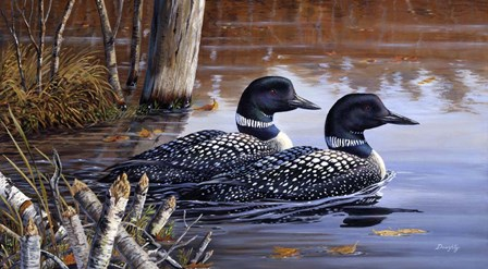 Beaver Pond Loons by Terry Doughty art print