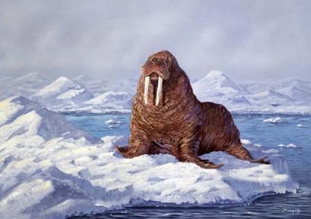 Walrus by Terry Doughty art print