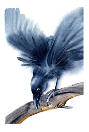 Crow by Olga Shefranov art print