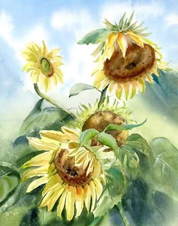Sunflowers by Olga Shefranov art print