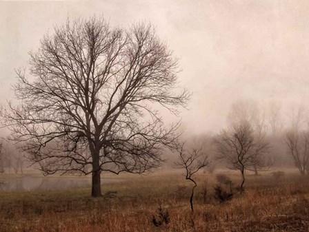 Morning Calm IV by Debra Van Swearingen art print
