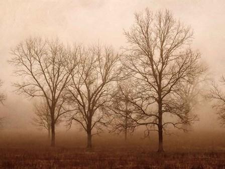 Morning Calm III by Debra Van Swearingen art print