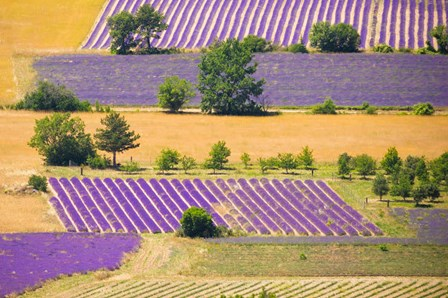 France, Provence, Sault Plateau Overview Of Lavender Crop Patterns And Wheat Fields by Jaynes Gallery / Danita Delimont art print
