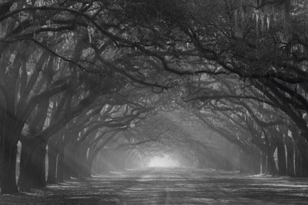 Georgia, Savannah, Wormsloe Plantation Drive In The Early Morning With Rays Of The Sun by Joanne Wells / Danita Delimont art print