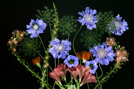 Botanical XI by Dennis Frates art print