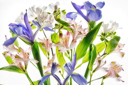 Botanical I by Dennis Frates art print