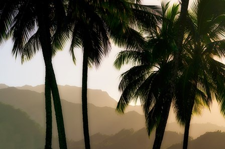 Misty Palms II by Dennis Frates art print