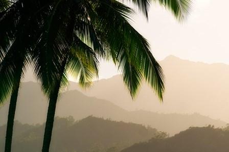 Misty Palms III by Dennis Frates art print