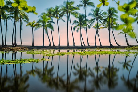 Palm Tree Reflections by Dennis Frates art print