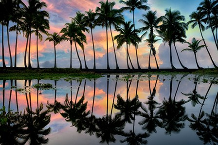 Palm Reflections by Dennis Frates art print