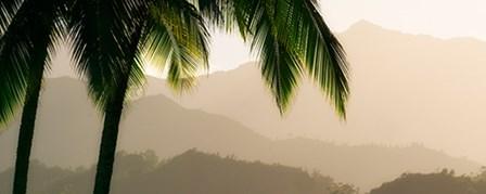 Misty Palms IV by Dennis Frates art print