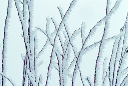 Icy by Dennis Frates art print