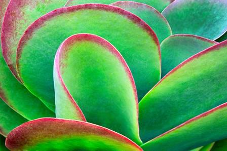 Succulent V by Dennis Frates art print