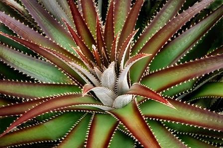 Succulent VI by Dennis Frates art print