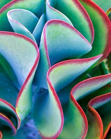 Succulent VII by Dennis Frates art print