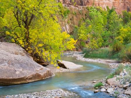 Utah Zion National Park, Virgin River by Jamie & Judy Wild / Danita Delimont art print