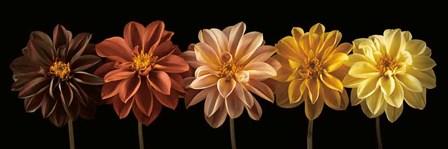 Floral Salute by Assaf Frank art print