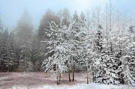 Frosty Morning by Mike Jones art print