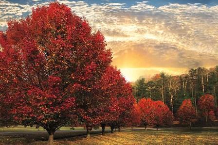 Crimson Trees by Celebrate Life Gallery art print