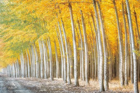 Gold Alley by Dennis Frates art print