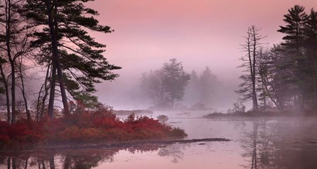 Pink Fog by Patrick Zephyr art print