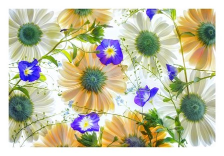 Gerbera flowers and Blue Ensign by Dennis Frates art print