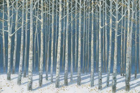 Shimmering Birches by James Wiens art print