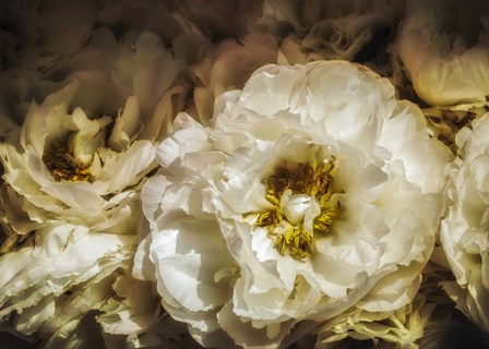 White Flowers by Sossi Madzounian art print